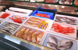 魚豊_新鮮な魚介