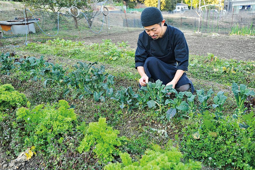 hoshizumi畑