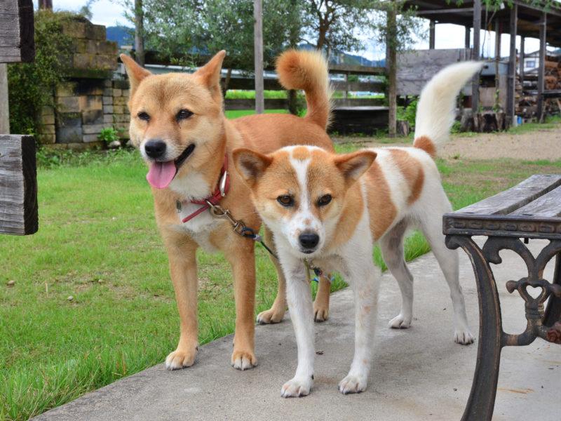 はながらの犬2匹